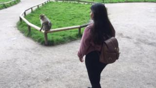 monkey sitting on a fence and a woman approaching