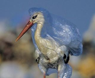 Stork trapped in plastic bag