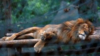 венесуэла, экономика, животные, зоопарк