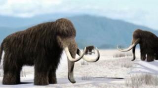 แมมมอธขนยาวมีชีวิตอยู่ในยุคน้ำแข็งครั้งล่าสุด และฝูงสุดท้ายสูญพันธุ์ไปเมื่อ 4,000 ปีก่อน