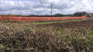 Hedges in Shelford Road, Radcliffe-on-Trent, Nottinghamshire