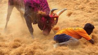 An dade ana wasan gargajiya na hawan kaho a Jihar Tamil Nadu ta kasar India