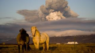 Icelandic horses in front of a volcano