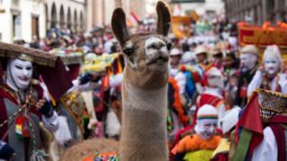 Какой такой кошелек? В Перу меньше всего шансов воссоединиться с пропажей