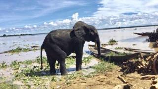 One of di elephants