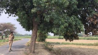 आम के पेड़ का जोड़ा