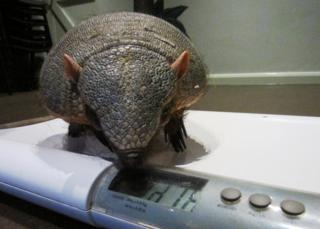 Gretel being weighed on some scales.