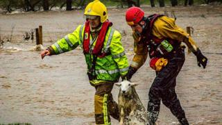 A stranded sheep has a lucky escape when it's rescued by fire service workers in Calthwaite in Cumbria.