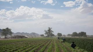 Agriculture has taken off with irrigation
