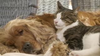 สุนัขและแมวนอนอยู่ด้วยกัน