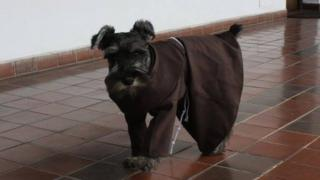 Friar Carmelo, the Bolivian dog