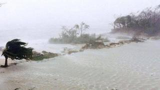 Trees blown sideways as Hurricane Matthew makes landfall in Adelaide, New Providence island in the Bahamas. 6 October 2016