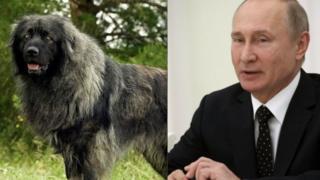Пас и Владимир Путин