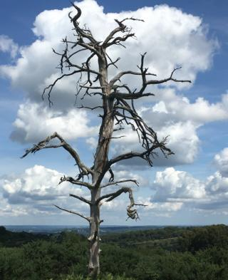 Tree branches with a cloud formation in the background
