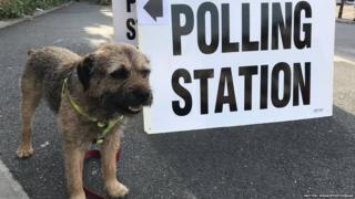 Dog at polling station