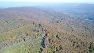 Drone footage of illegal logging in Romanian national park