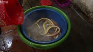 งูในกาละมัง