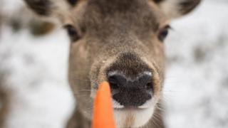 Deer at Rannock Moor