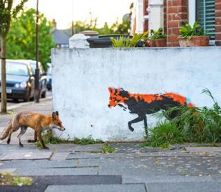 Міська лисиця