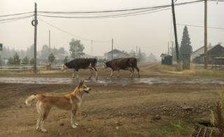 Собака с коровами