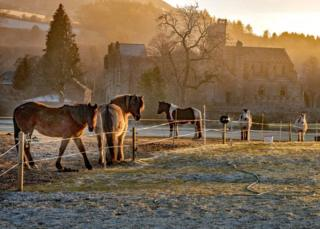 ponies in front of Melrose Abbey