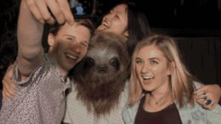 Image from the Stoner Sloth campaign shows the sloth character taking a selfie with friends