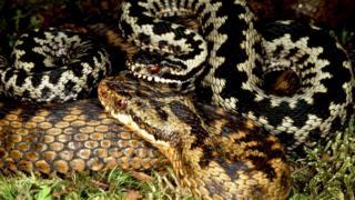 _97531594_snake3.jpg