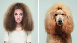 A woman stares forward with very big hair next to a picture of a poodle with lots of yellow fur.