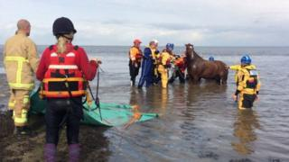 Horse rescued from the rising tides