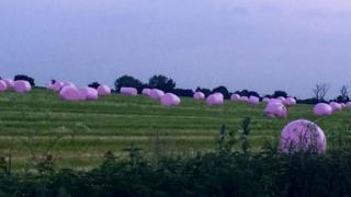 Pink hay bales in field