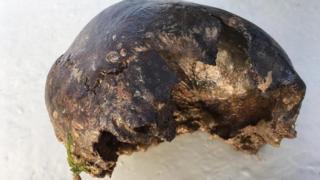 Bronze Age skull found off Mersea Island