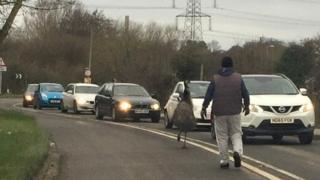 Emu on Highbridge Road