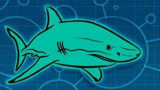 Ilustração de tubarão