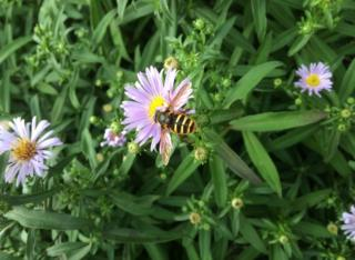 Insect in garden in Lenzie