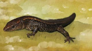 La lagartija gigante marrón