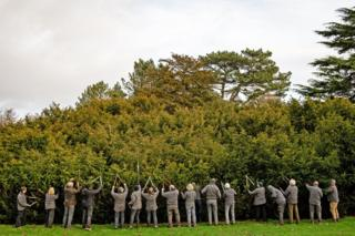 """Volunteers taking part in the """"Great Yew"""" during the annual prune of the 400-year-old yew at the National Trust's Shugborough Estate in Staffordshire."""