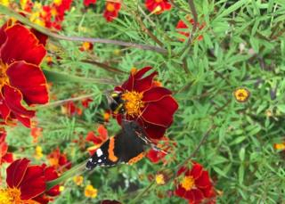 bee and a butterfly sharing the nectar on a flower