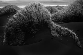 Grass growing out of sand dunes