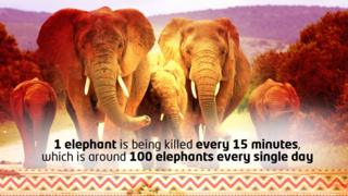 Elephants graphic