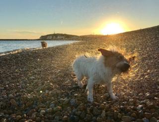 A wet dog on a beach