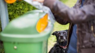 Woman picking dog litter