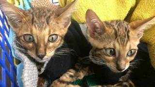 Dumped kittens