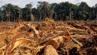 Árvores cortadas na Amazônia