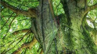Treesong installation on Durdham Downs, Bristol