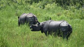 rinoceronte, Índia