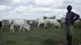 Samburu boy tends his family's cattle