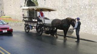 Tenby Carriage Rides