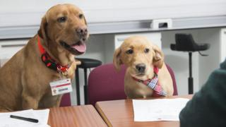 Two dogs in interview room