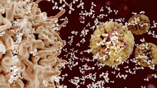Glóbulos blancos atacando a vírus.