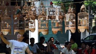 Một quán cà phê chim ở Hà Nội
